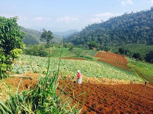 Thai_farming